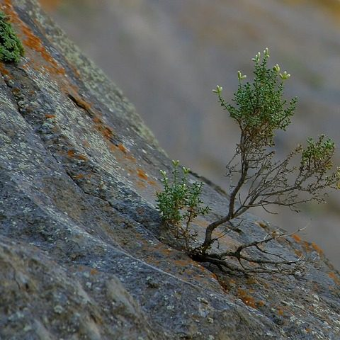 tree seedling on side of rock cliff face